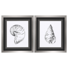 Propac Shell Sketch II Wall Art Set of 2
