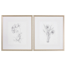 Uttermost Botanical Sketches Wall Art Set of 2