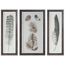 Uttermost Feather Study Prints Set of 3