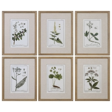 Uttermost Green Floral Botanical Study Wall Art Set of 6