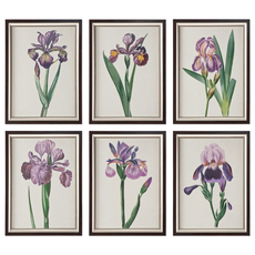 Uttermost Iris Beauties Floral Prints Set of 6