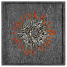 Uttermost Kumara Shadow Box