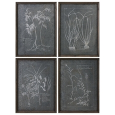 Uttermost Root Study Wall Art Set of 4