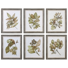 Uttermost Seedlings Wall Art Set of 6