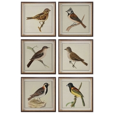 Uttermost Spring Soldiers Bird Prints Set of 6