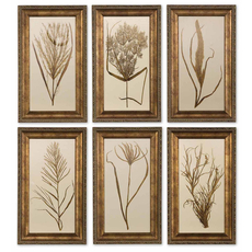 Uttermost Wheat Grass Prints Set of 6
